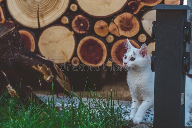 Potomstwa kocą się badający ogród zdjęcie royalty free