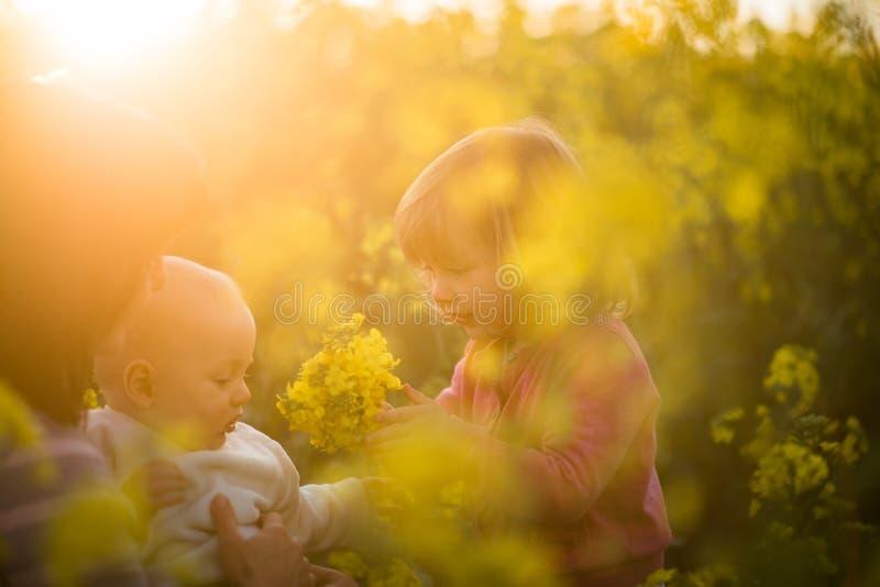 Potomstwa matkują z dzieciakami w rapeseed polu obraz stock