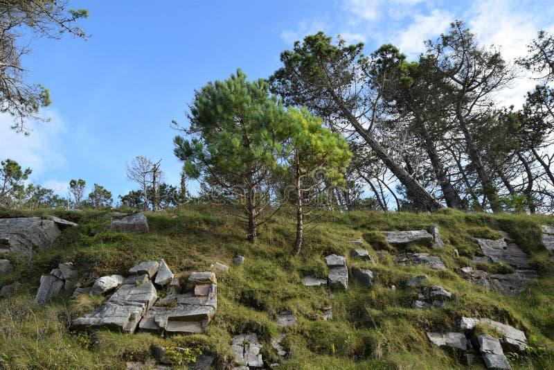 Potomstwa z starzy drzewa na skałach w lasu parku, Co Donegal, Irlandia zdjęcie stock