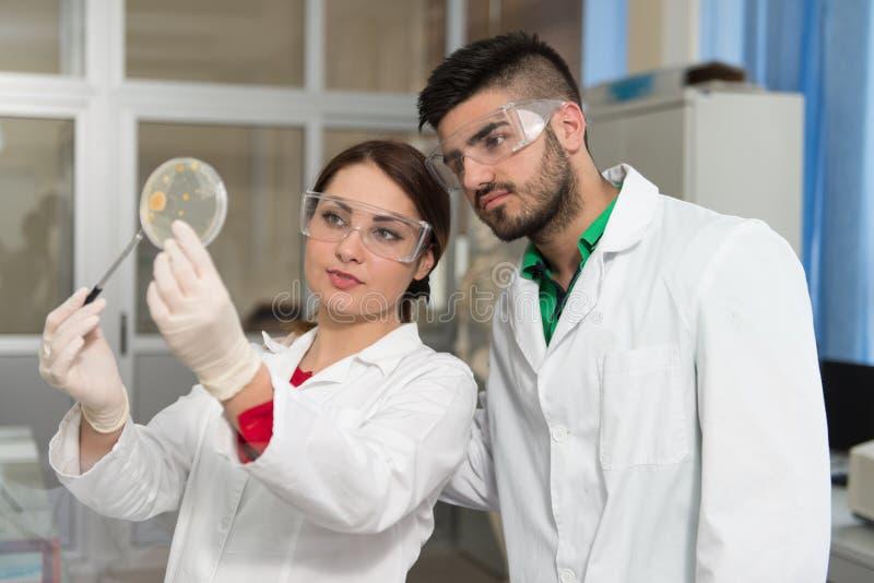 Potomstwo grupa naukowowie Pracuje Przy laboratorium zdjęcie royalty free