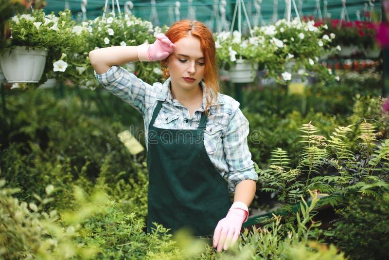 Potomstwo męcząca kwiaciarnia w fartuchu i menchii rękawiczek zamyślenie pracuje z roślinami w szklarni obraz stock