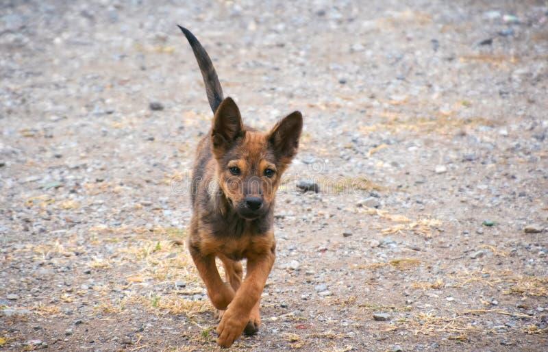 Potomstwo pies biega z kopii przestrzenią , przybłąkany pies biega obraz royalty free