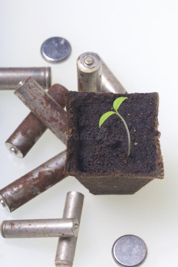 Potomstwo zieleni krótkopędy flance w torfowiskowych zbiornikach Otaczają być ubranym out bateriami, pokrywać z korodowaniem środ fotografia stock