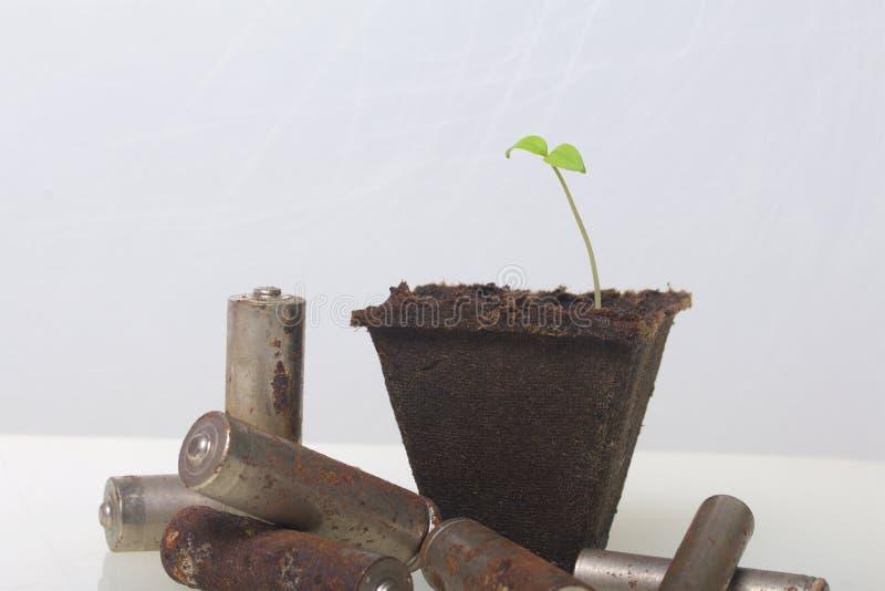 Potomstwo zieleni krótkopędy flance w torfowiskowych zbiornikach Otaczają być ubranym out bateriami, pokrywać z korodowaniem środ zdjęcie royalty free