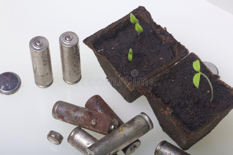 Potomstwo zieleni krótkopędy flance w torfowiskowych zbiornikach Otaczają być ubranym out bateriami, pokrywać z korodowaniem środ zdjęcie stock