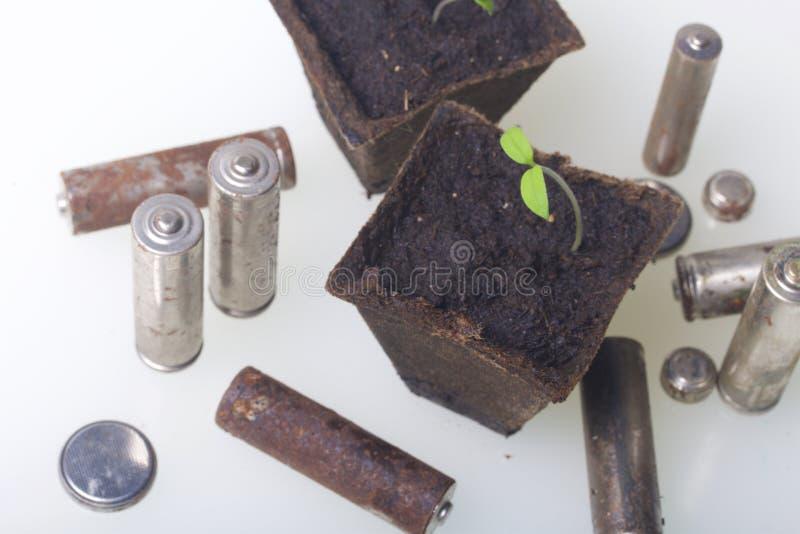 Potomstwo zieleni krótkopędy flance w torfowiskowych zbiornikach Otaczają być ubranym out bateriami, pokrywać z korodowaniem środ obrazy royalty free