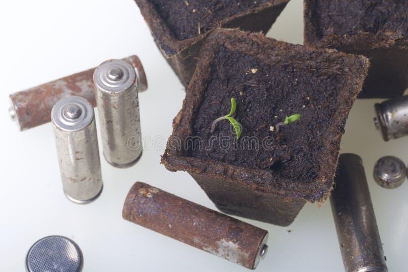 Potomstwo zieleni krótkopędy flance w torfowiskowych zbiornikach Otaczają być ubranym out bateriami, pokrywać z korodowaniem środ obraz royalty free