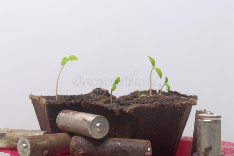 Potomstwo zieleni krótkopędy flance w torfowiskowych zbiornikach Otaczają być ubranym out bateriami, pokrywać z korodowaniem środ fotografia royalty free