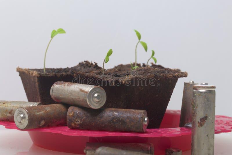 Potomstwo zieleni krótkopędy flance w torfowiskowych zbiornikach Otaczają być ubranym out bateriami, pokrywać z korodowaniem środ zdjęcia stock