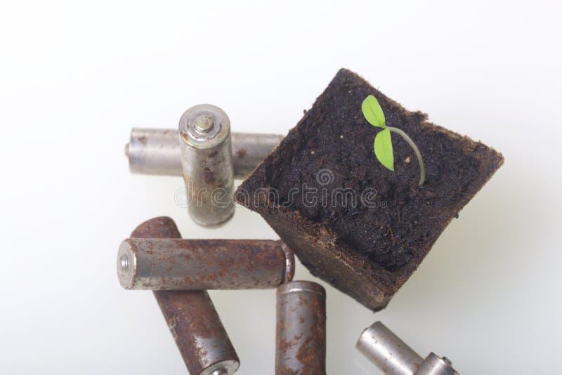 Potomstwo zieleni krótkopędy flance w torfowiskowych zbiornikach Otaczają być ubranym out bateriami, pokrywać z korodowaniem środ obraz stock