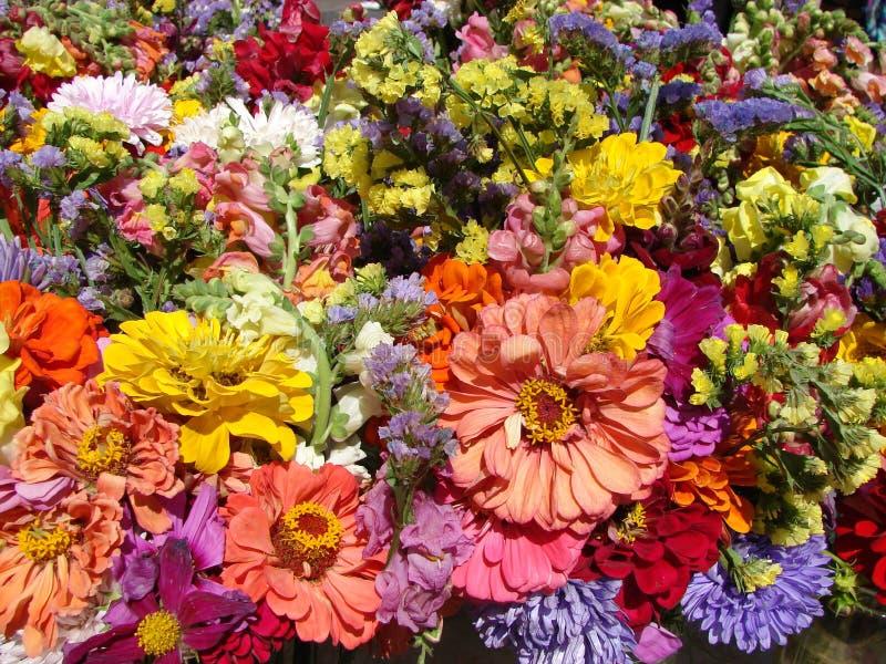 Potpourri of flowers stock images