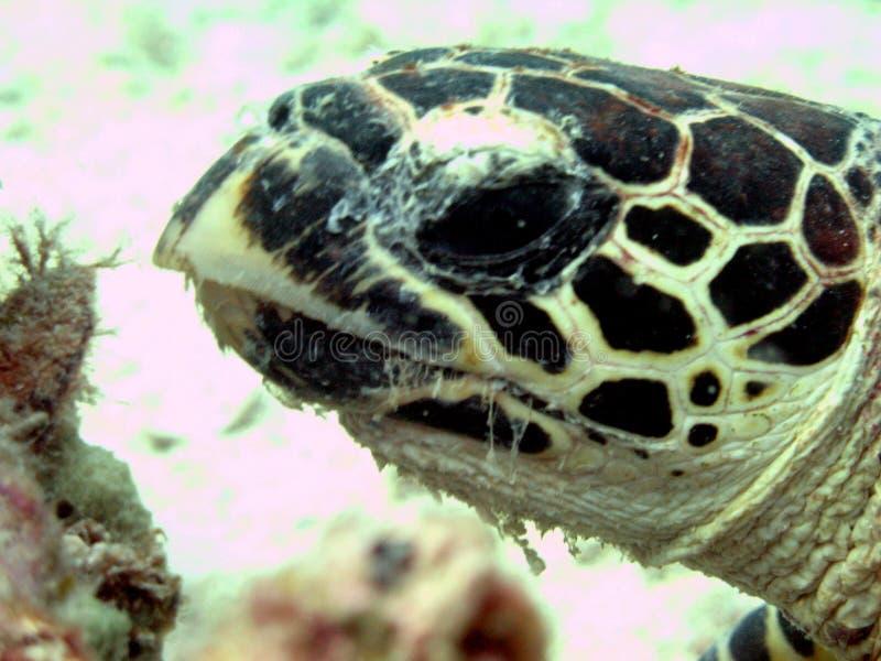 potrait żółwia fotografia stock
