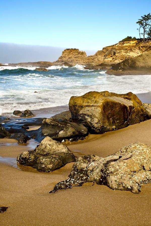Potrait del litorale dell'Oregon fotografia stock