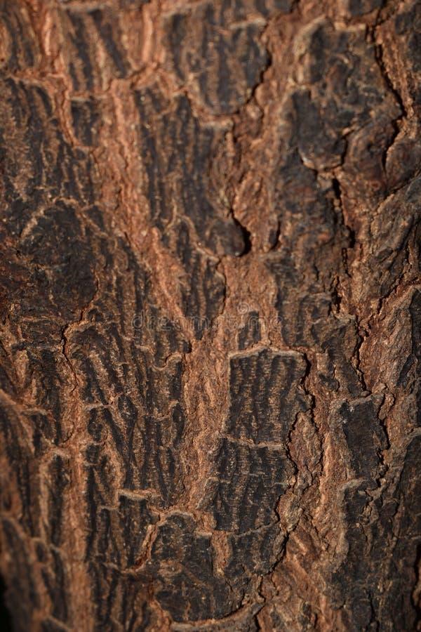 Potrait sköt av träd royaltyfri fotografi