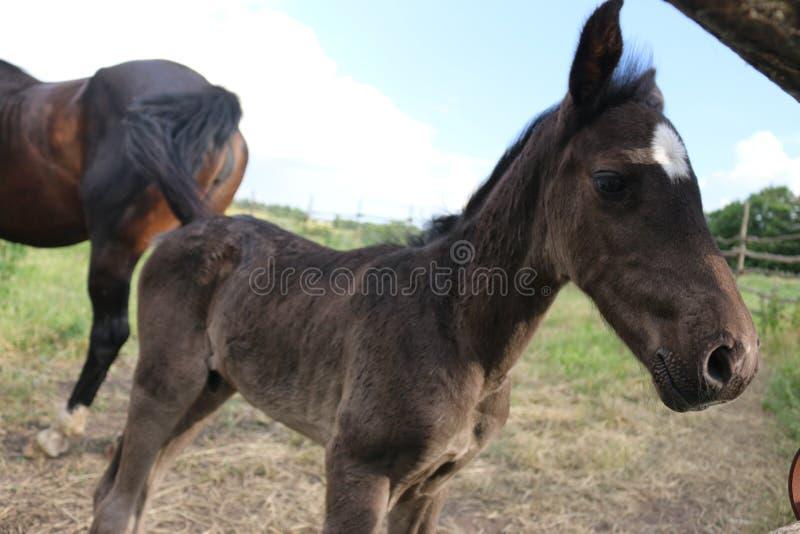 Potro de Brown con una estrella blanca en las miradas detrás de la cerca, animales, naturaleza, caballos de la frente imagen de archivo