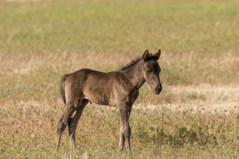 Potro novo bonito do cavalo selvagem fotografia de stock royalty free