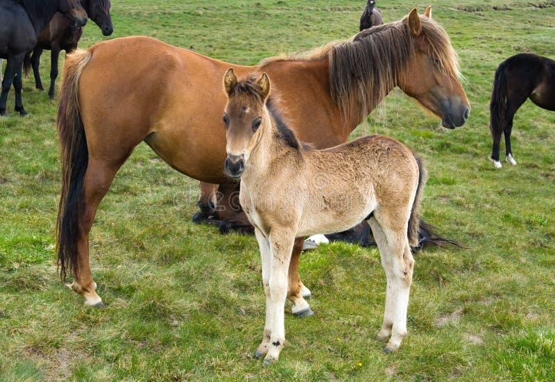 Potro novo do cavalo foto de stock royalty free