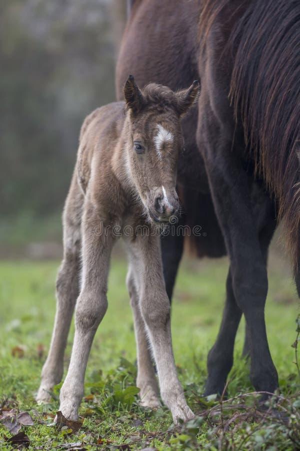 Potro recién nacido con su madre fotos de archivo