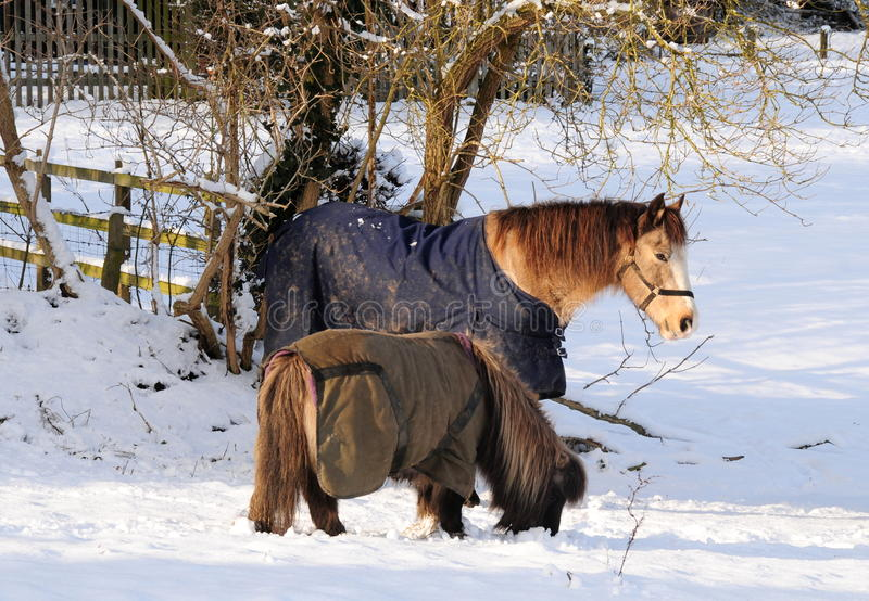 Potros en invierno imagen de archivo libre de regalías