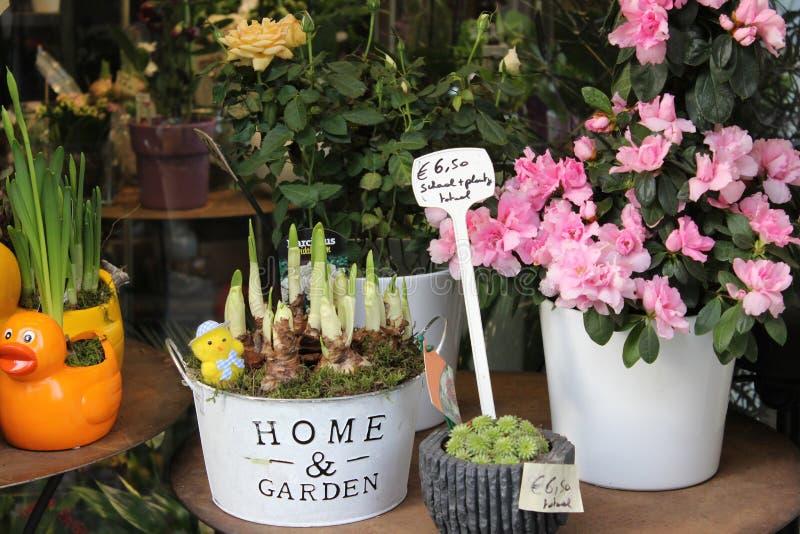 Pots avec des fleurs de ressort dans une boutique photographie stock libre de droits