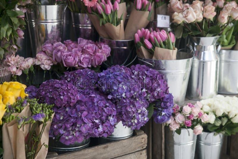 Pots avec le beau rose de floraison et fleurs pourpres d'hortensia ? vendre en dehors de fleuriste Entr?e de magasin de jardin d? images stock