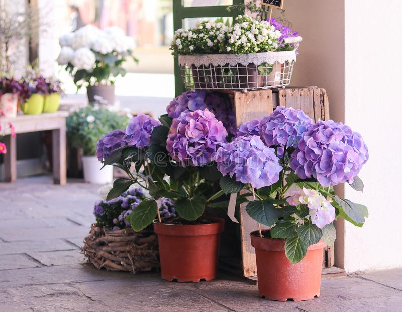 Flower Pots With Blooming Flowers Stock Photo Image Of