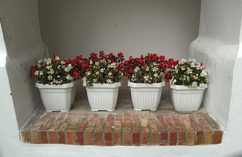 4 pots with blooming red and white flowers on wall. 4 pots with blooming red and white flowers, on wall stock photos
