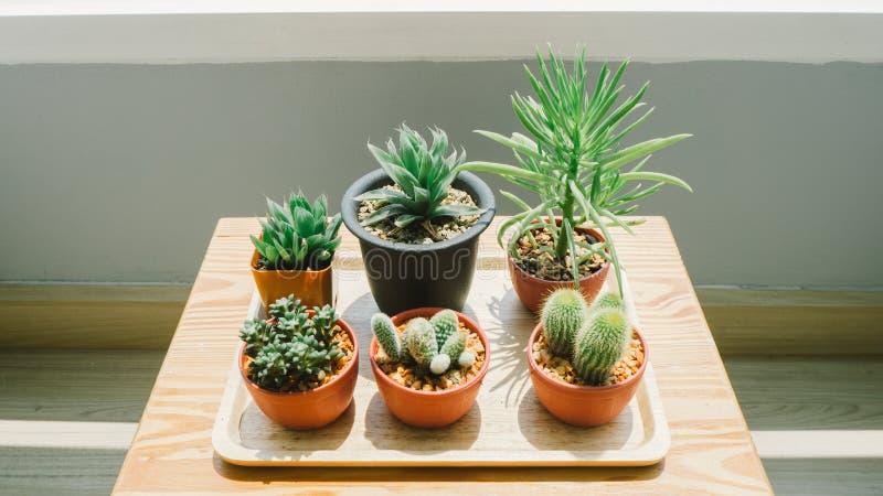 Pots de cactus dans la lumière de matin photos stock