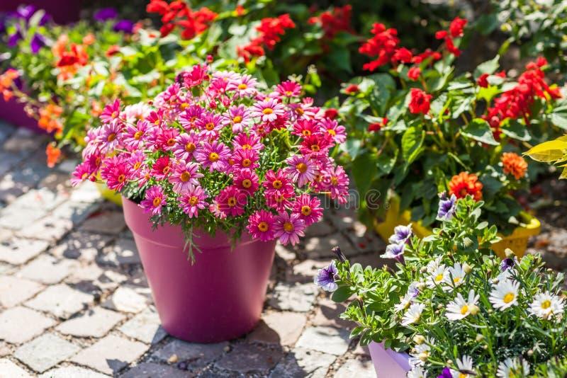 Pots de fleur images stock