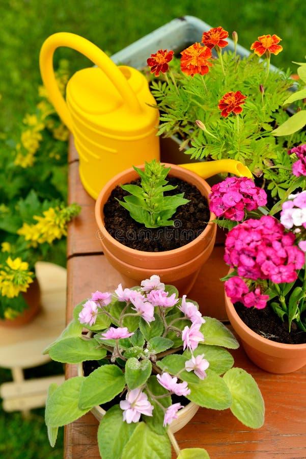 Pots de fleur et pot d'arrosage dans le jardin vert photo stock