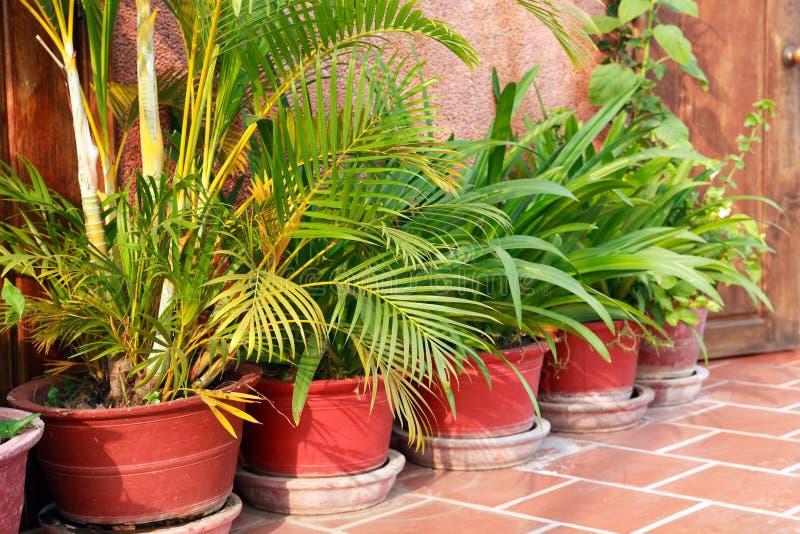Pots de fleur réglés images stock