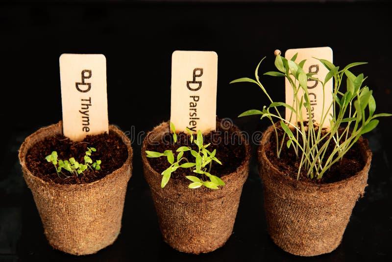 Pots de tourbe de jeunes plantes sur un fond noir images libres de droits