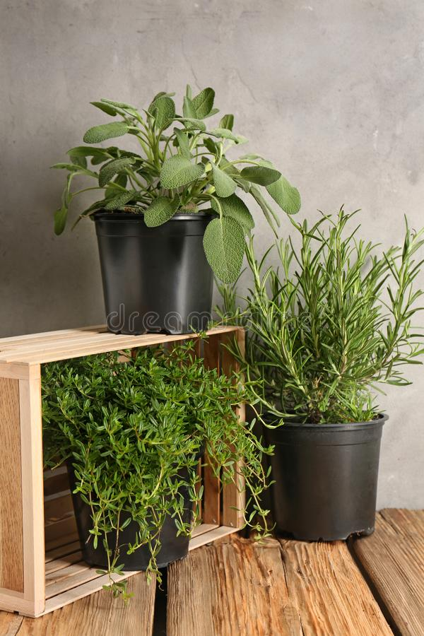 Pots with fresh aromatic herbs on wooden table royalty free stock images