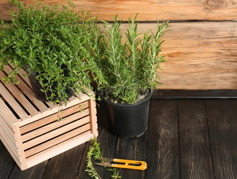 Pots with fresh aromatic herbs on wooden table stock images