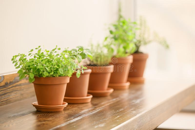 Pots with fresh aromatic herbs on wooden table royalty free stock photography