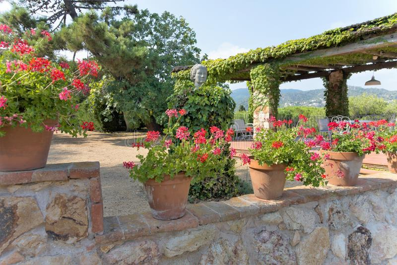 Pots of geraniums blooming on the fence of one of the city spanking in Tossa de Mar, Spain. Bright red flowers, arbor entwined with green plants, a plaster royalty free stock image