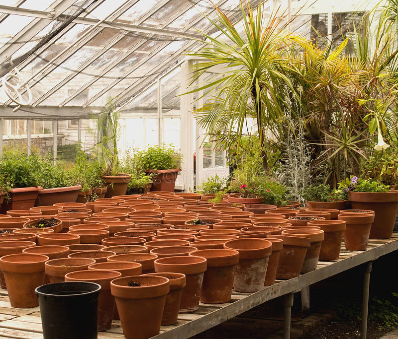 Pots in a greenhouse. Clay pots inside a greenhouse stock photography