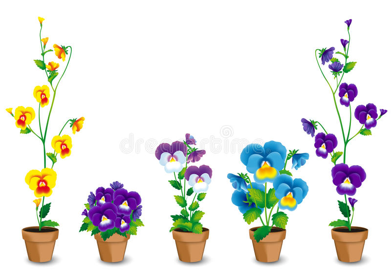 Pots of pansies royalty free illustration