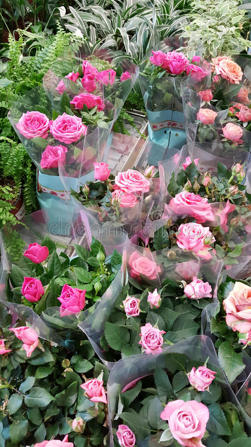 Pots with pink roses. Many species of roses on the flowers market royalty free stock photo