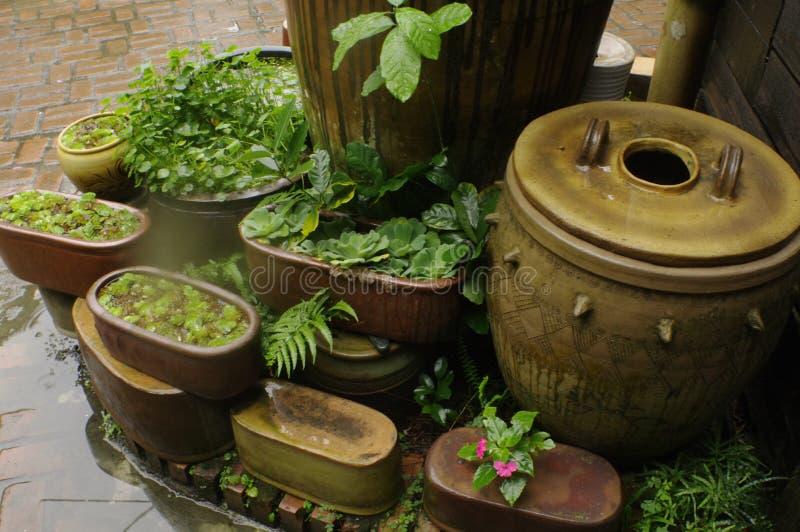 Pots And Plants Free Public Domain Cc0 Image