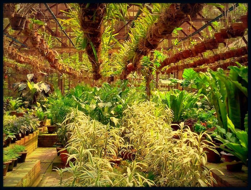 Pots & tree. Pots & greentree & green house royalty free stock photos