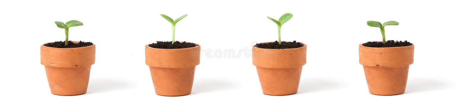 Pots on White royalty free stock image