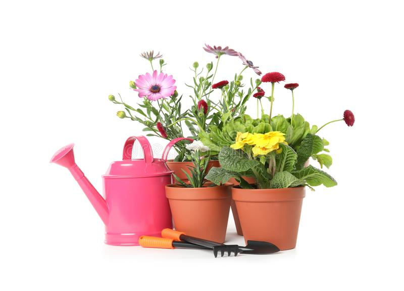 Potted blooming flowers and gardening equipment. On white background royalty free stock photo