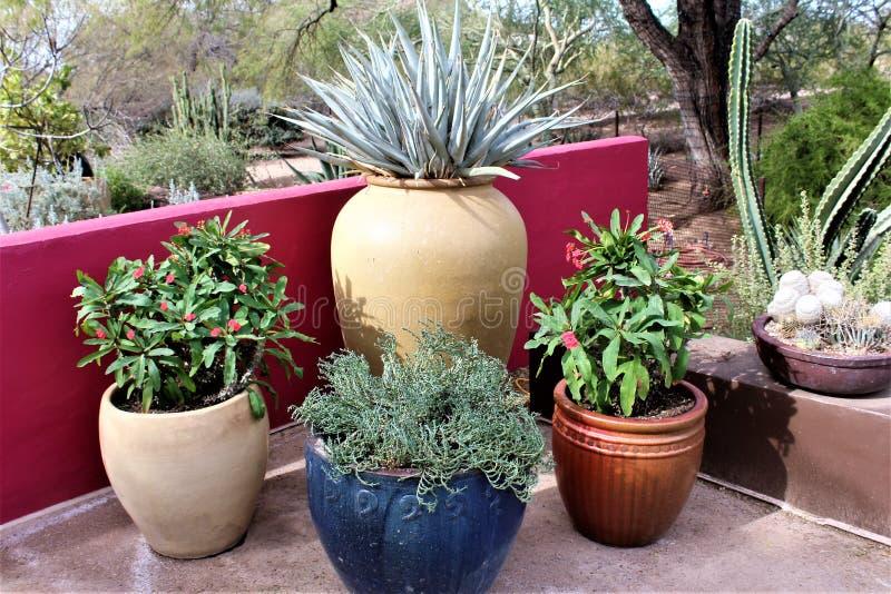Desert Botanical Garden Phoenix, Arizona,United States. Potted cactus at the Desert Botanical Garden during the winter located in Phoenix, Arizona, United States royalty free stock images