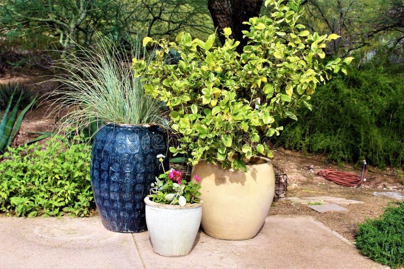 Desert Botanical Garden Phoenix, Arizona,United States. Potted cactus at the Desert Botanical Garden during the winter located in Phoenix, Arizona, United States stock photo