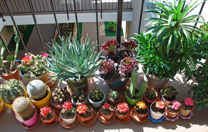 Potted Cactus Garden On A Tri Level Condo Building Walkway