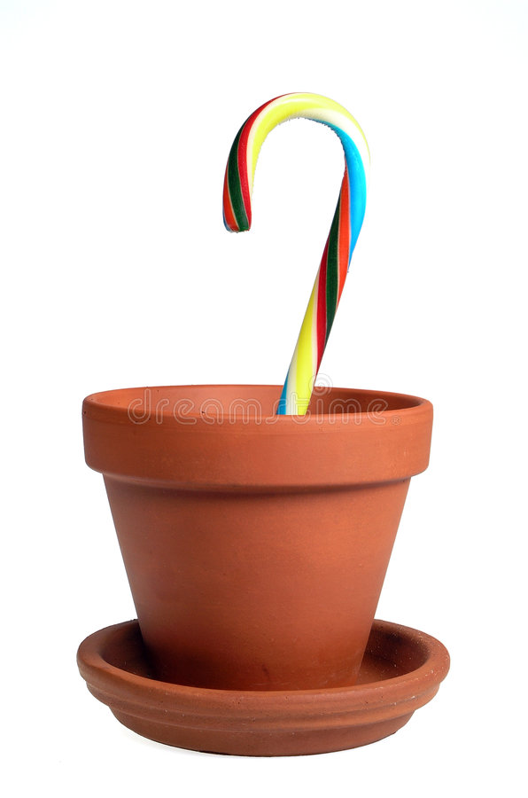 Potted Cane stock image