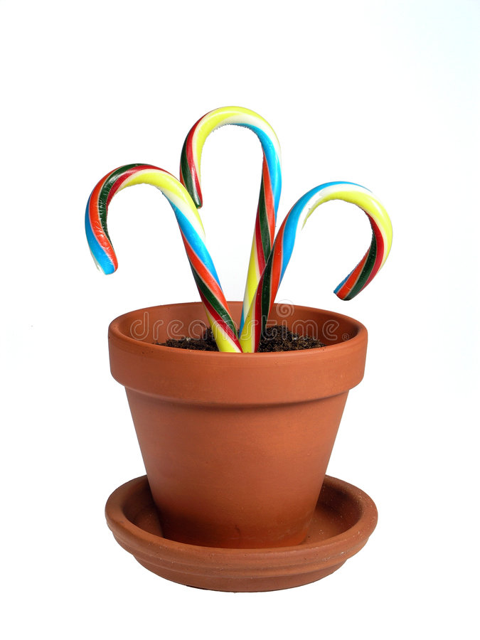 Potted Canes stock photography
