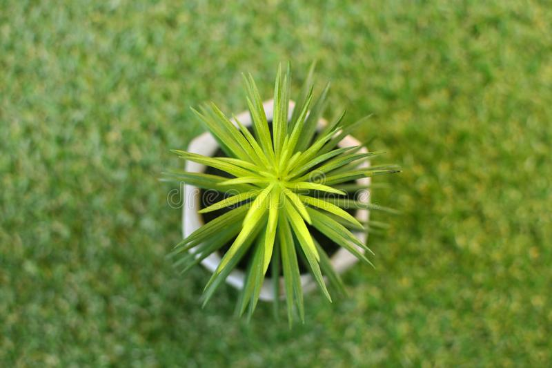 Potted flower on a green grass top view. stock images