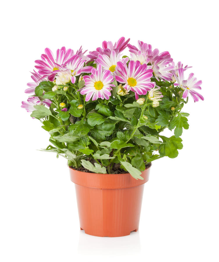 Potted flower stock photo